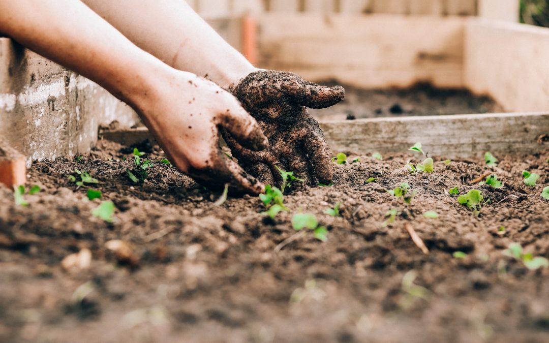 Tips voor een groene tuin